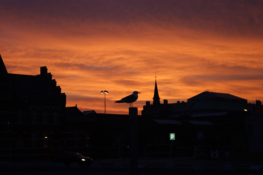Malmo-bird-at-sunrise