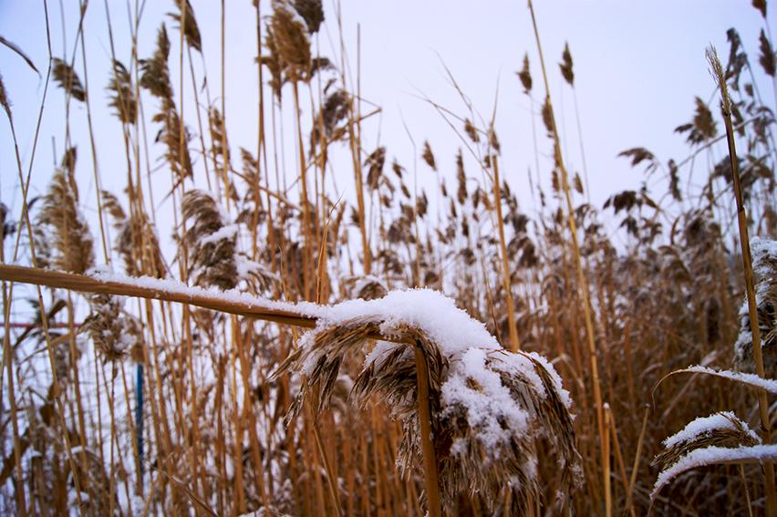 first-snow2
