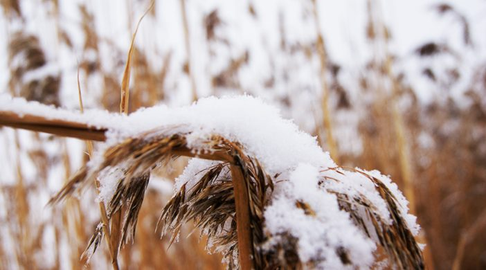 first-snow_m
