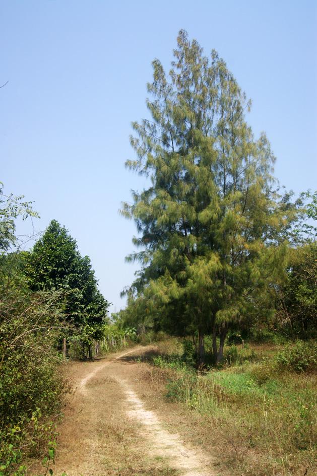 park thailand