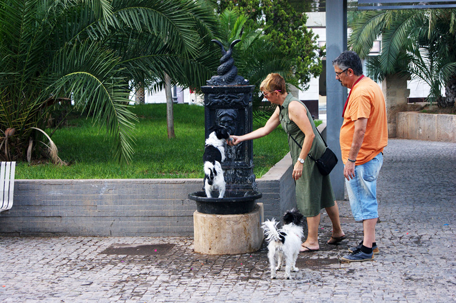 собаки-в-Валенсии