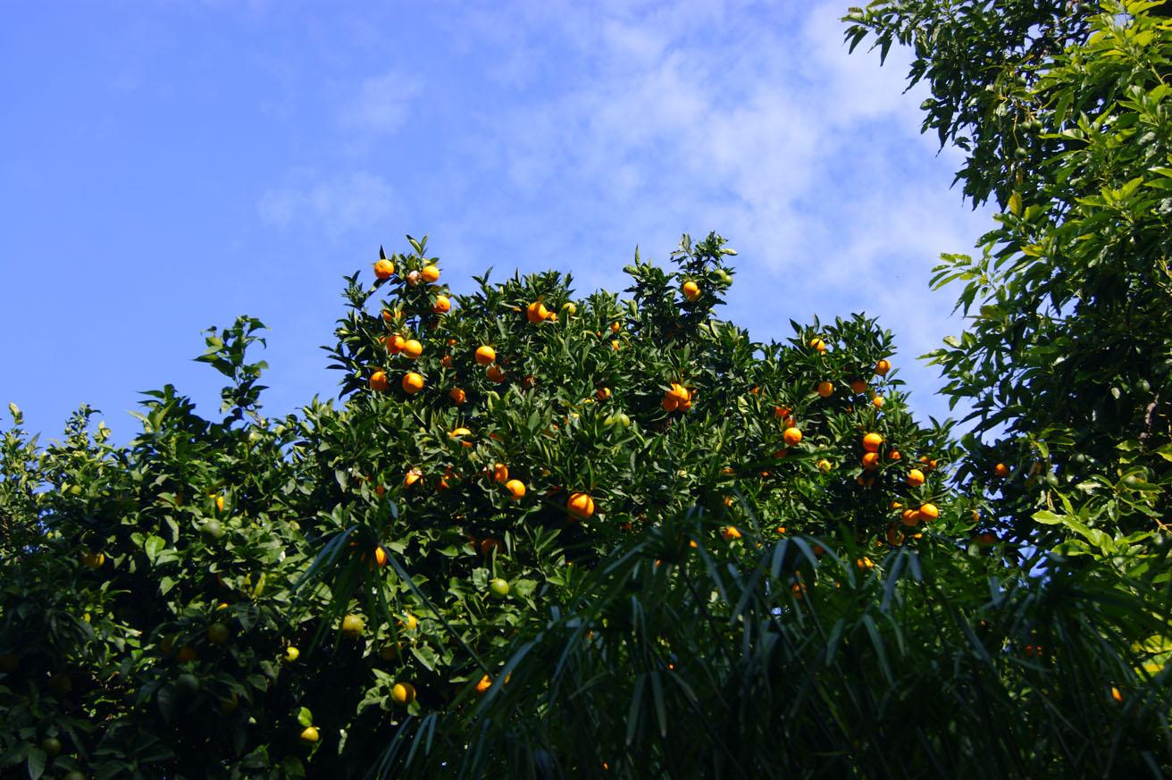 небо апельсины хорватия