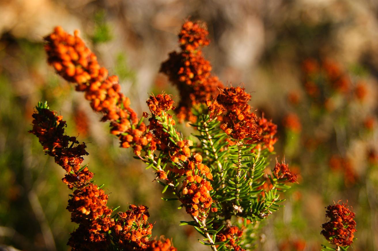 растения на горе в дубровнике