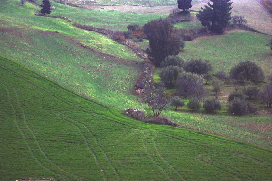 деревья поля в сицилии