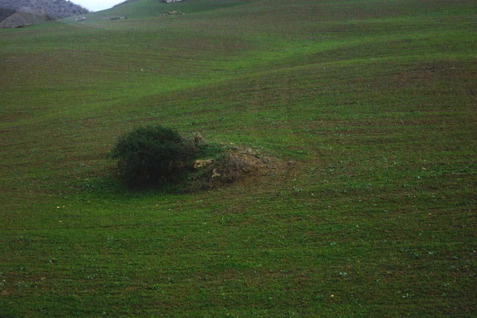 зелень Сицилии