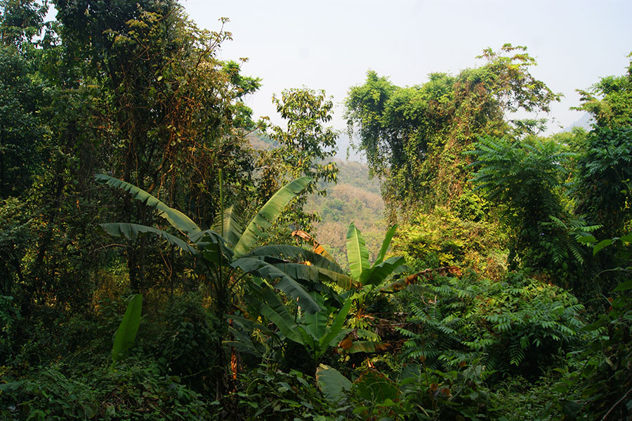 Джунгли в Лаосе
