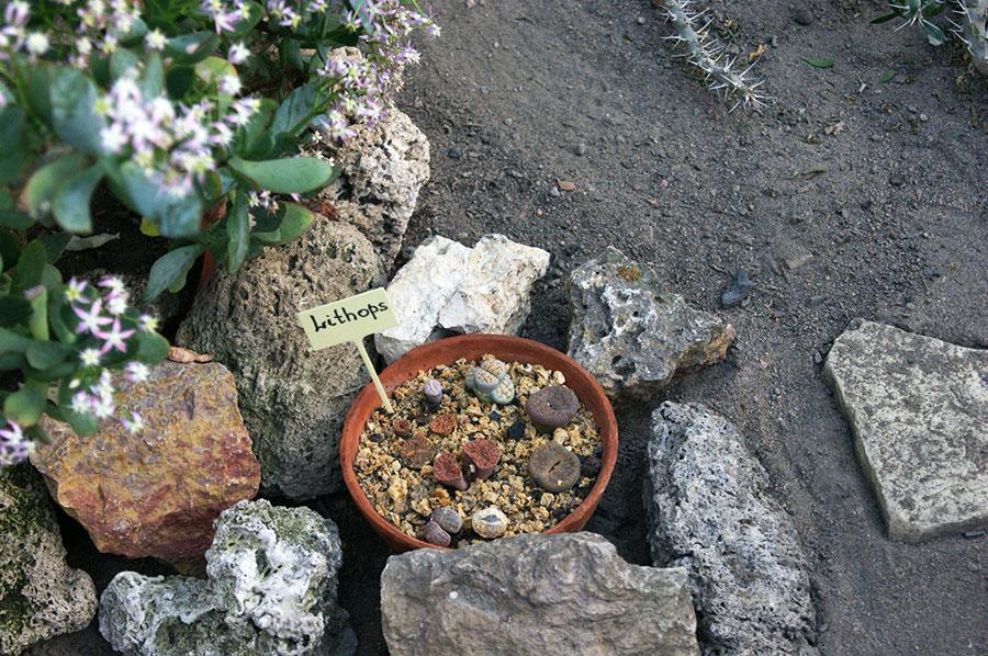zivye kamni