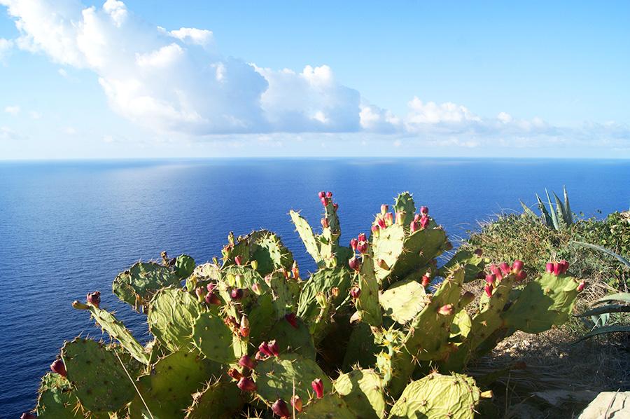 опунция на Мальте