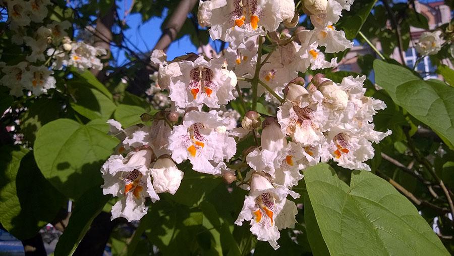 цветы в Пятигорске