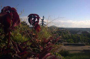 цветы пятигорск
