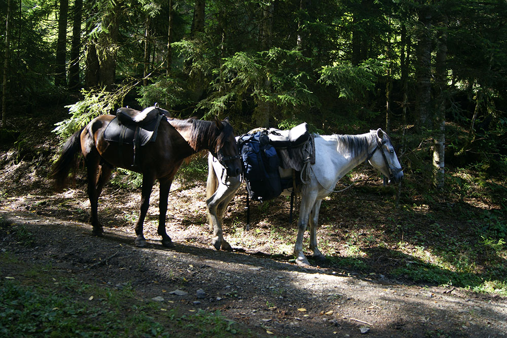 Боржоми на лошадях